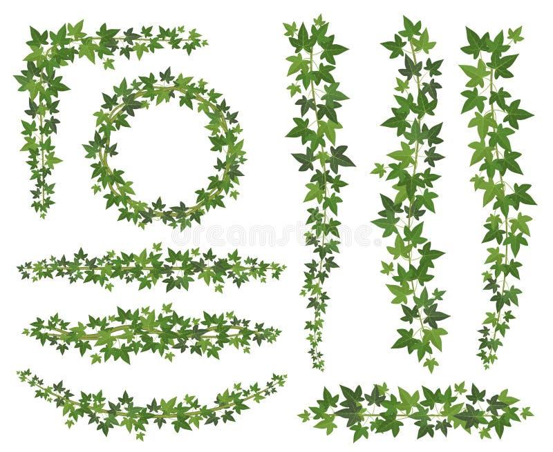Hiedra verde Hojas en ramas colgantes de las enredaderas Sistema del vector de la planta de la pared de la decoración de la hiedr stock de ilustración