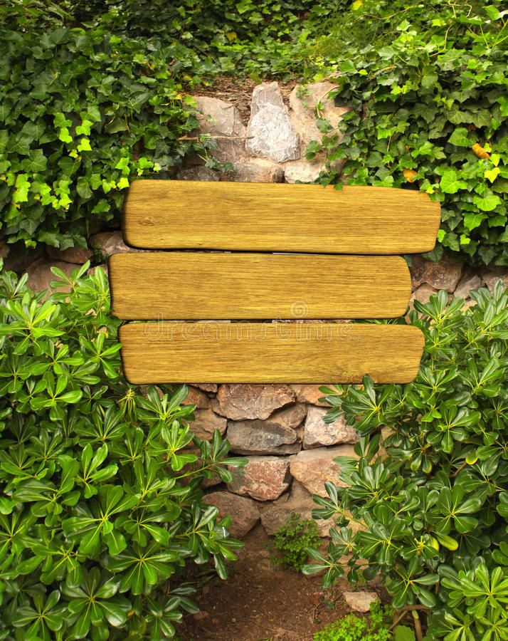 Hiedra y muestra de madera en la pared antigua imagen de archivo libre de regalías