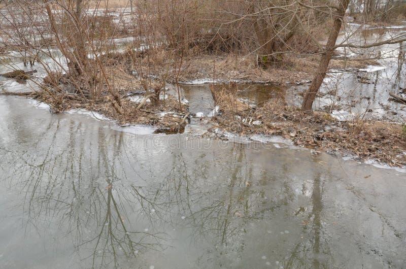 Hielo de agua y fango y plantas congelados imagenes de archivo