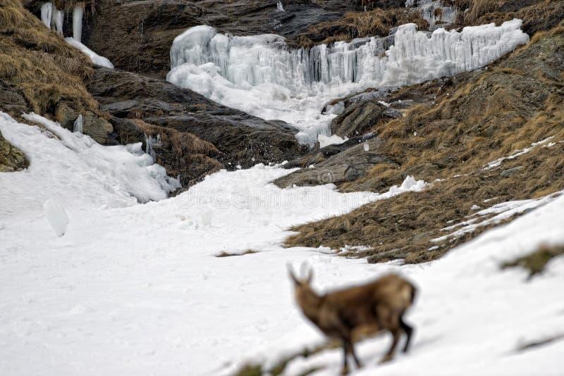 Hielo de la diapositiva de la nieve de la avalancha que cae de rocas foto de archivo