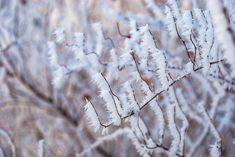 Hielo de la naturaleza del extracto del invierno del color de la rama de Frost fotos de archivo