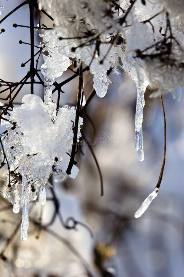 Hielo del invierno imagenes de archivo