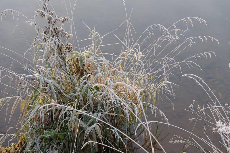 Hielo en las plantas imagen de archivo libre de regalías