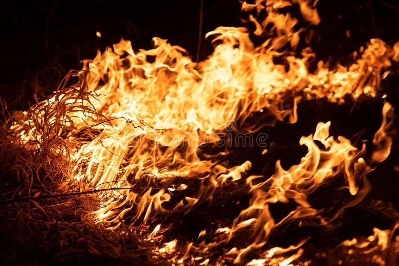Hierba ardiendo en el campo, cierre para arriba Naturaleza en el fuego Temas del fuego, del desastre y de acontecimientos extremo fotos de archivo libres de regalías
