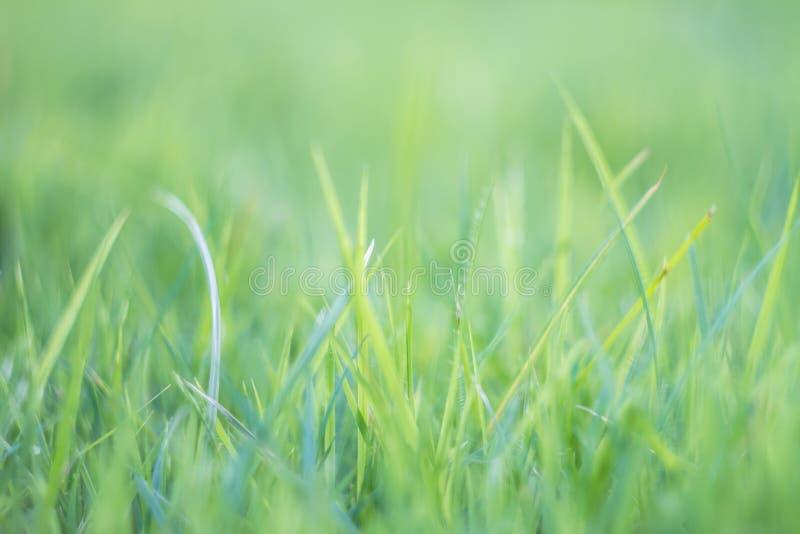 Hierba borrosa fuera del extracto tropical b del campo de hierba verde del foco imagenes de archivo