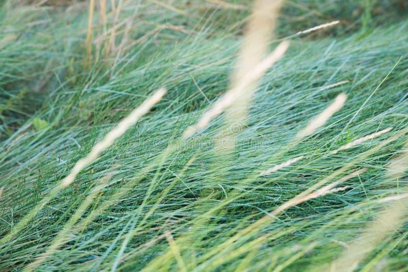 Hierba conducida por el viento imagenes de archivo