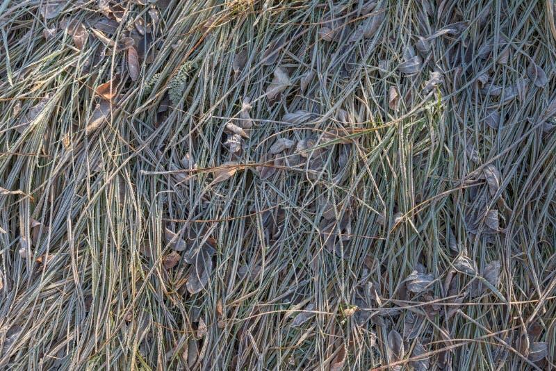 Download Hierba Congelada Con Los Cristales De Hielo En Invierno Foto de archivo - Imagen de bosque, verde: 100531544