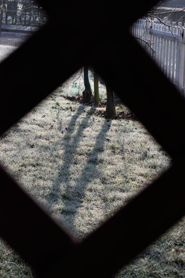 Hierba congelada con rejilla fotografía de archivo