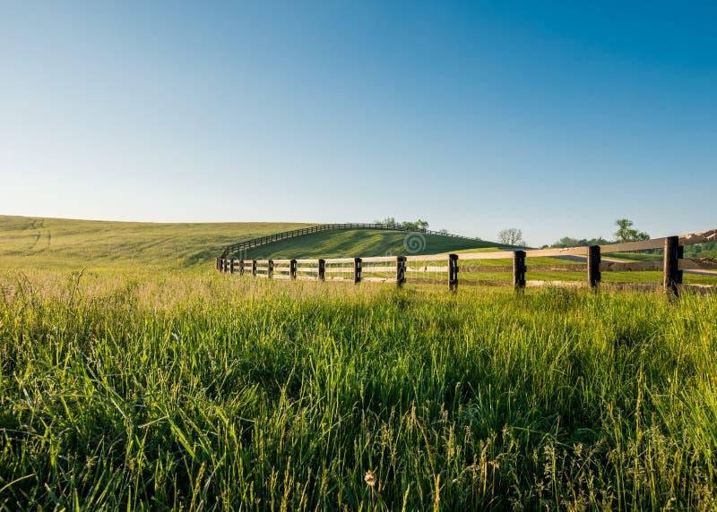 Hierba cubierta de rocio alta en Rolling Hills de Kentucky imágenes de archivo libres de regalías