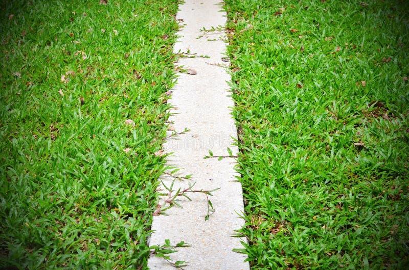 Hierba de la calzada entre los arbustos en el jardín a lo largo del espacio s fotografía de archivo libre de regalías