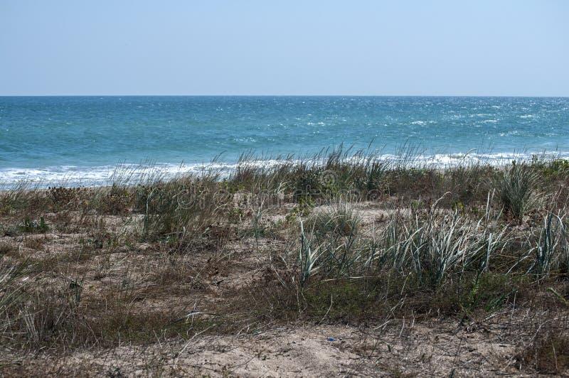 Hierba de la duna en la playa arenosa imagenes de archivo