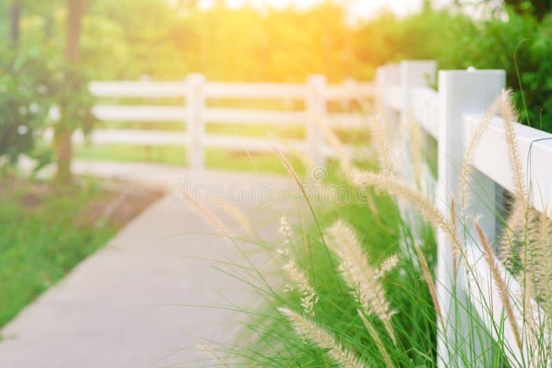 Hierba de la flor cerca de caminos concretos y de la cerca blanca foto de archivo libre de regalías