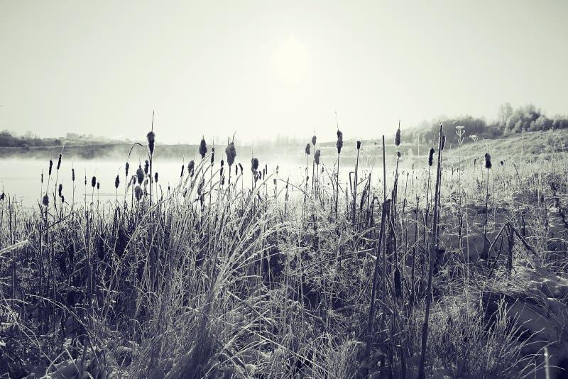 Hierba de la helada del invierno fotos de archivo libres de regalías