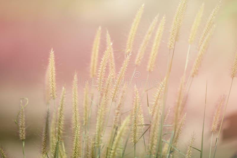 Hierba de la mañana de la sol imagen de archivo libre de regalías