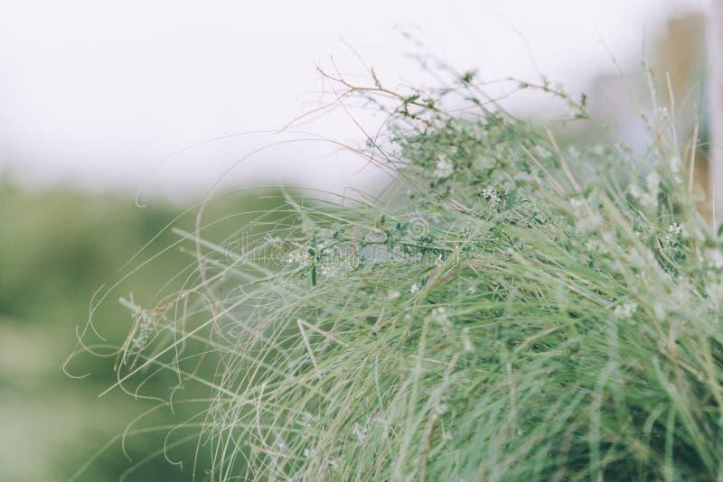 Hierba de la playa del verde de Whispy imágenes de archivo libres de regalías