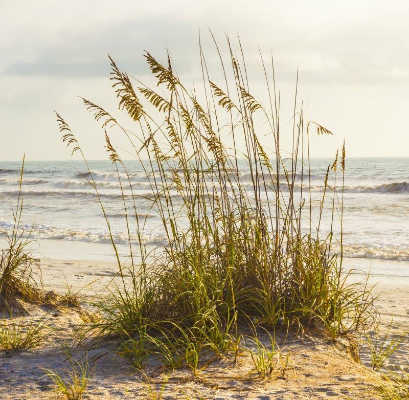 Hierba de la playa delante del océano foto de archivo libre de regalías