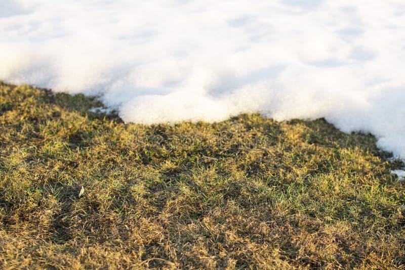 Hierba de la primavera, césped después del invierno, derretimientos de la deriva de la nieve fotos de archivo