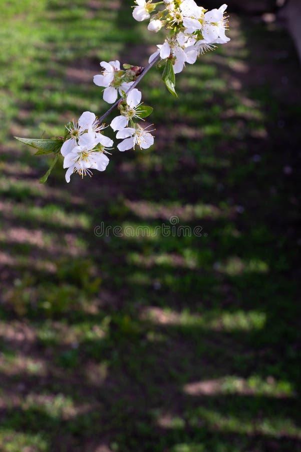 Hierba de la primavera con las flores imagenes de archivo