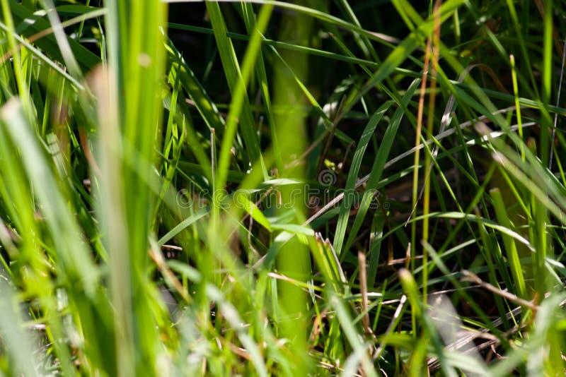 Hierba de la primavera con los tallos secos imagenes de archivo