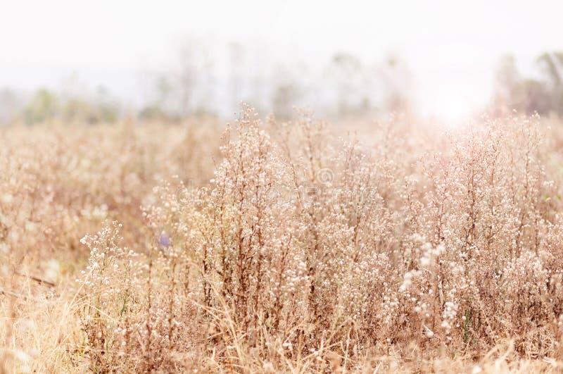 Hierba de las flores fotografía de archivo
