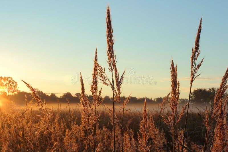 Hierba de pradera del andropogon grande fotos de archivo