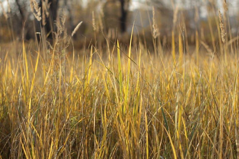 Hierba de prado en el verano imágenes de archivo libres de regalías