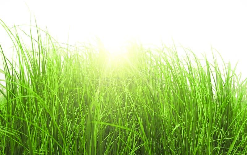 Hierba de prado verde en día asoleado imagenes de archivo
