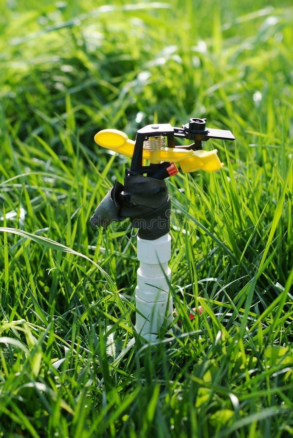 Hierba de riego de la regadera de la irrigación foto de archivo libre de regalías