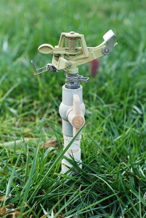 Hierba de riego de la regadera de la irrigación fotografía de archivo libre de regalías