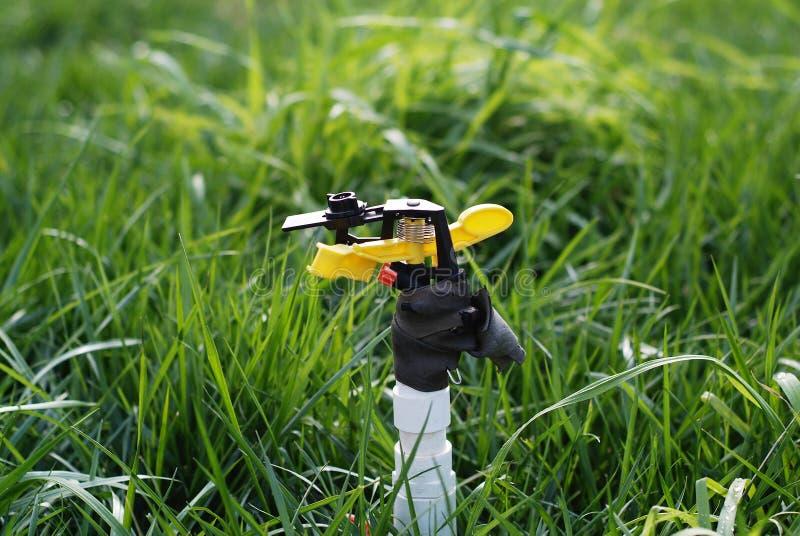 Hierba de riego de la regadera de la irrigación imagen de archivo libre de regalías