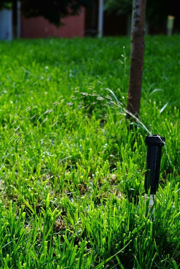 Hierba de riego de la regadera de la irrigación fotografía de archivo