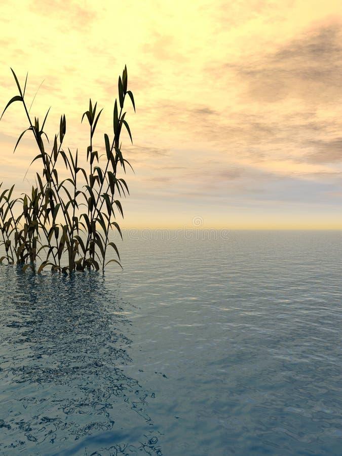 Hierba del agua stock de ilustración