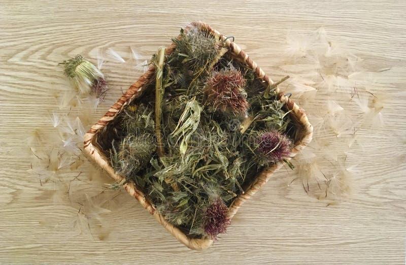 Hierba del cardo de la leche en polvo en una cesta de mimbre con las semillas imagen de archivo libre de regalías