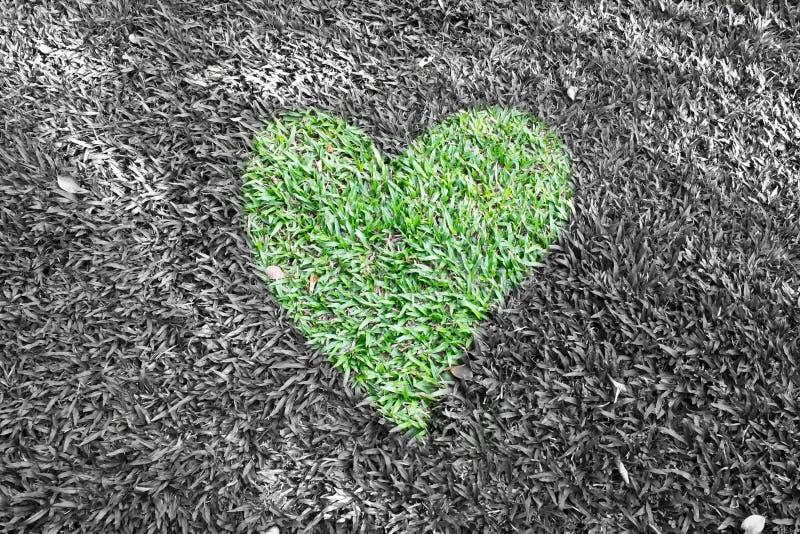 Hierba del corazón fotos de archivo
