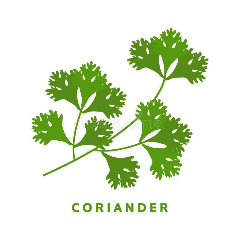 Hierba del coriandro, perejil chino, ejemplo del vector de la comida stock de ilustración