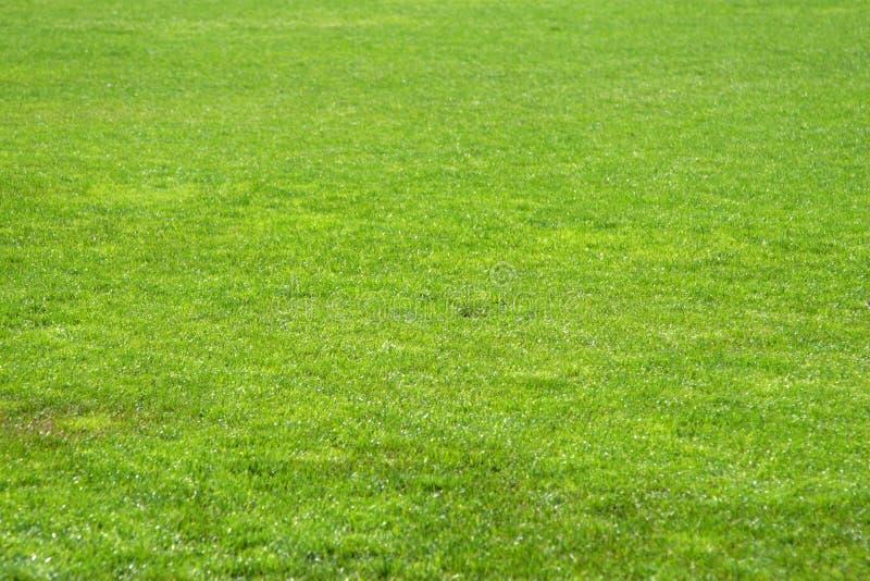 Hierba del fútbol foto de archivo libre de regalías
