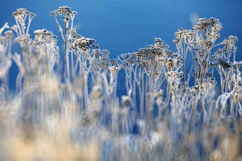 Hierba del invierno fotografía de archivo