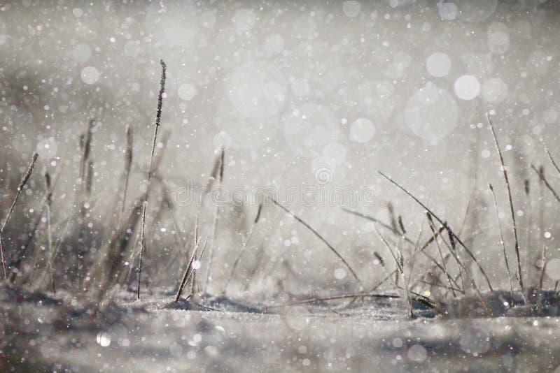Hierba del invierno foto de archivo