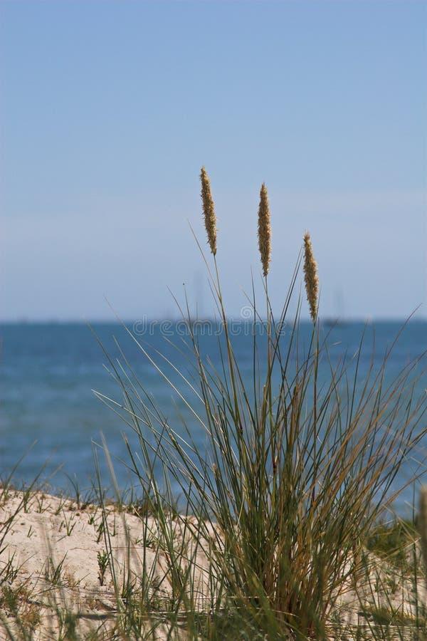 Hierba del mar en la duna de arena con el mar detrás imagenes de archivo