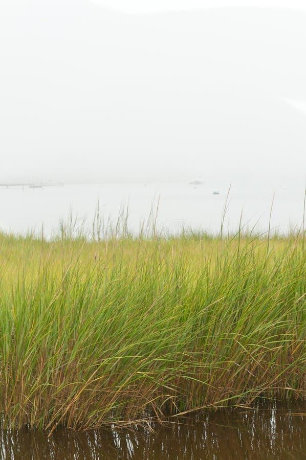 Hierba del mar que crece en backbay de una isla atlántica de la barrera imagenes de archivo