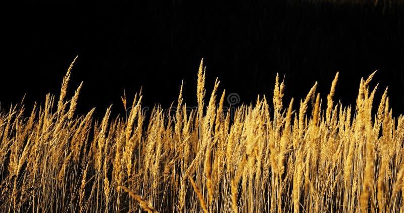 Hierba del otoño. foto de archivo libre de regalías