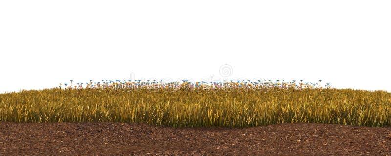 Hierba del otoño aislada en el ejemplo blanco del fondo 3D fotografía de archivo libre de regalías