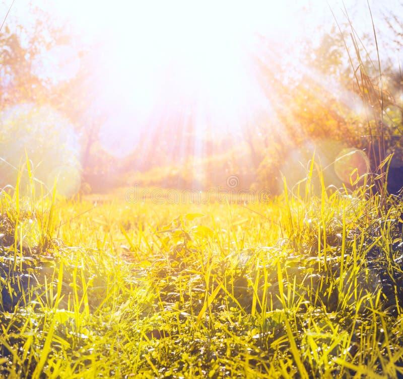 Hierba del otoño con el haz y el bokeh, fondo del sol de la naturaleza imágenes de archivo libres de regalías