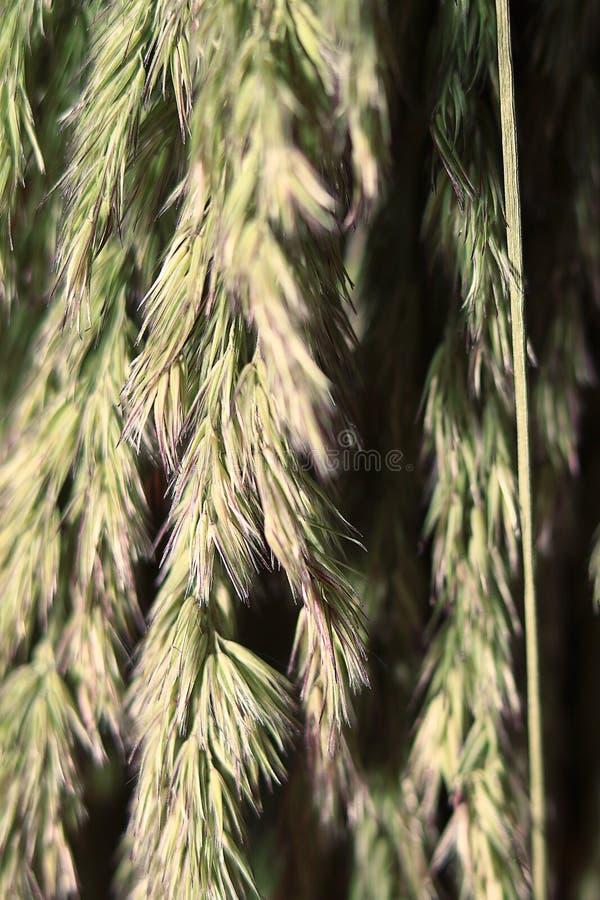 hierba del otoño del fondo imagen de archivo libre de regalías