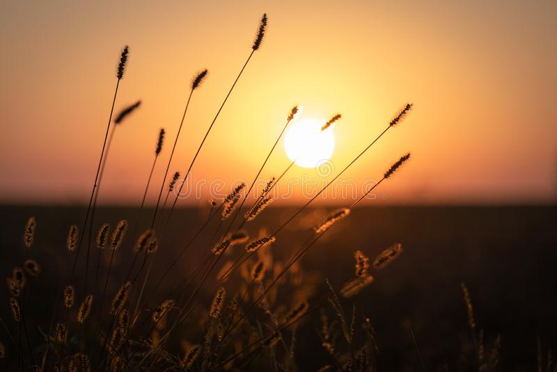 Hierba del otoño en luz de la puesta del sol imagen de archivo