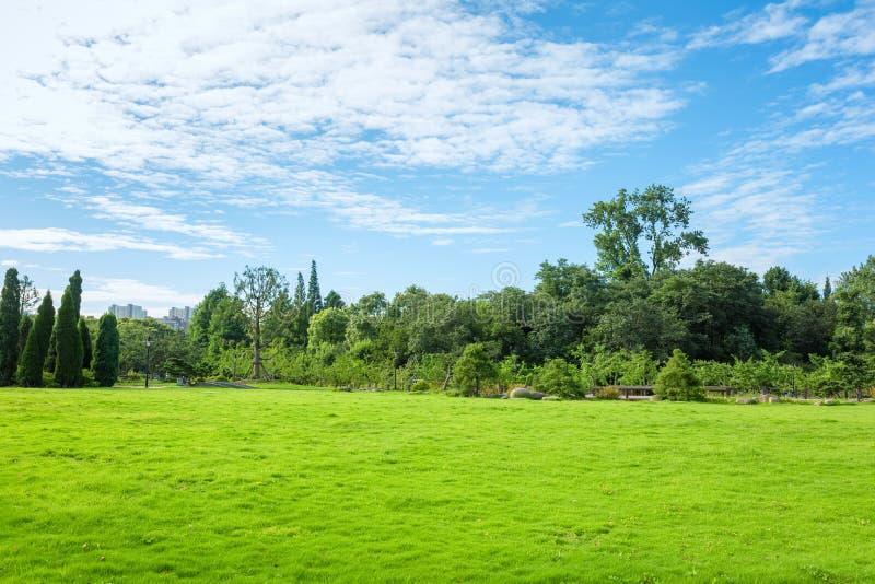 Download Hierba Del Parque Por Mañana Imagen de archivo - Imagen de resorte, cubo: 41919767