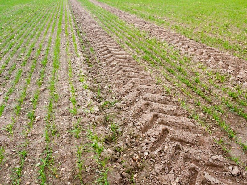 Hierba del piso de la trayectoria de la suciedad del fondo de la pista del tractor del neumático de la tierra de cultivo fotografía de archivo