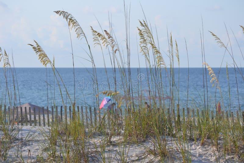 Hierba del trigo en la playa fotos de archivo libres de regalías