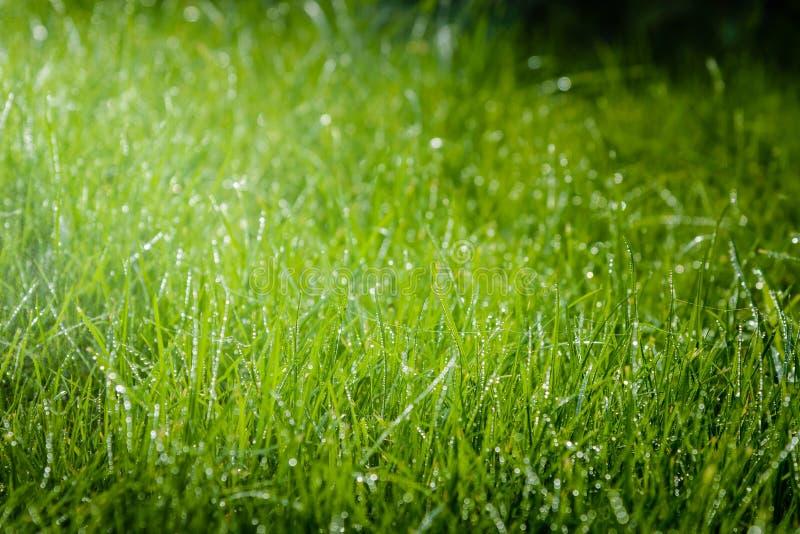 Hierba después de la lluvia fotografía de archivo