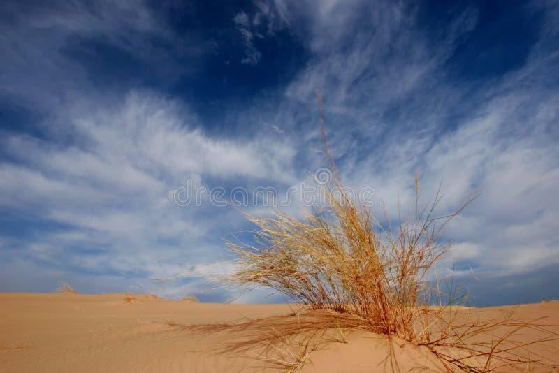 Hierba, duna y cielo imagen de archivo libre de regalías